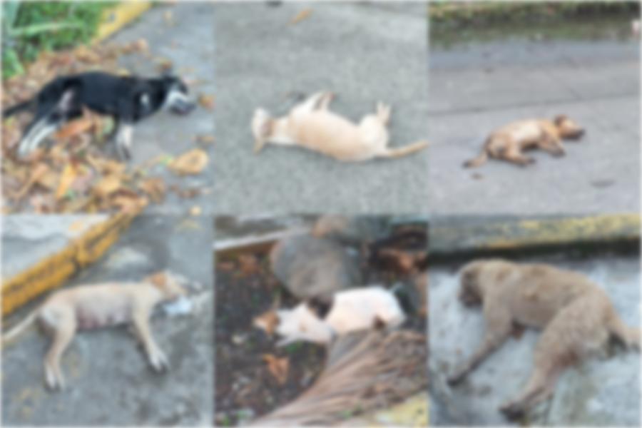 Perros en situación de calle son envenenados en Vega de Alatorre
