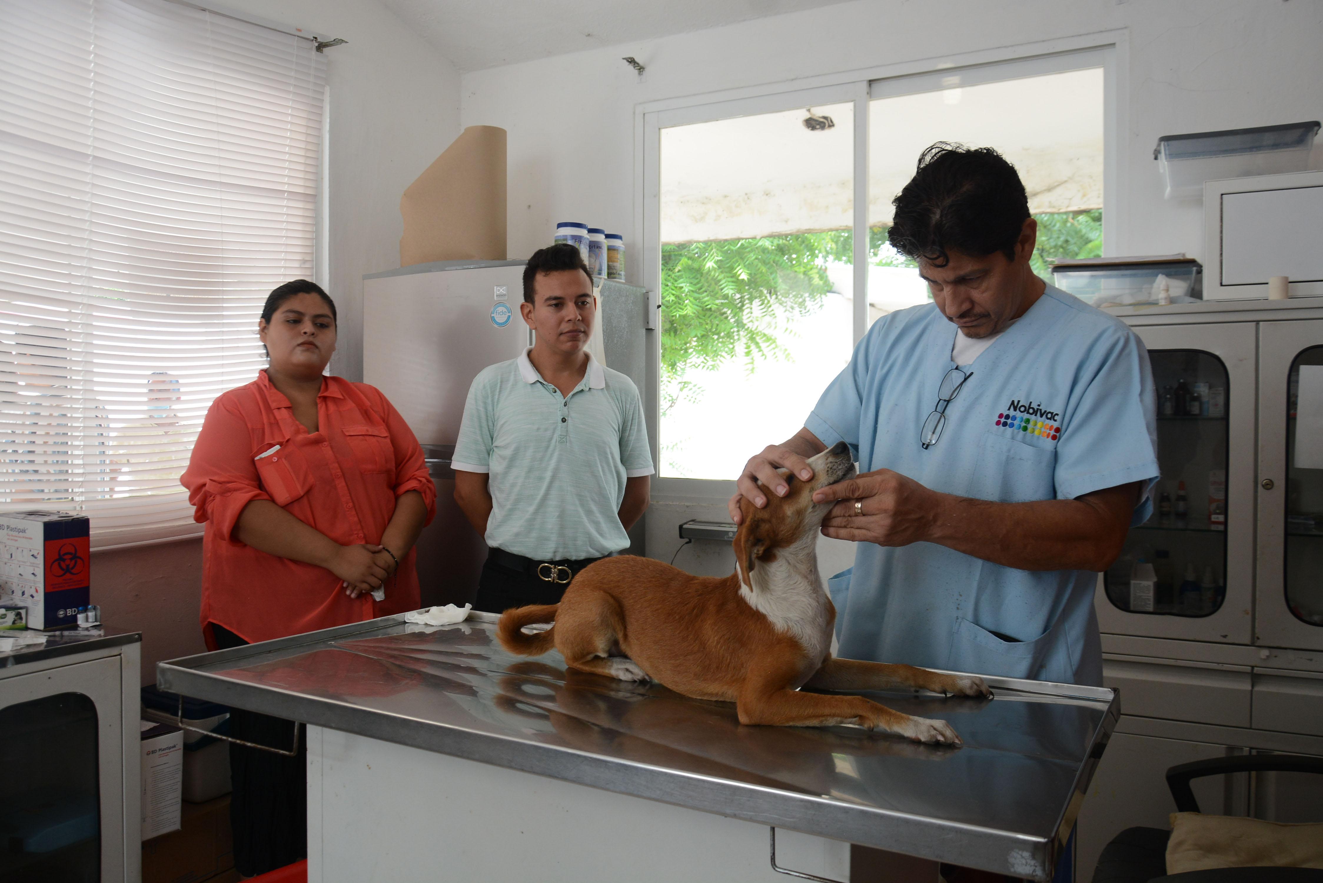 Ayuntamiento porteño procura bienestar de mascotas en Centro de Salud Animal