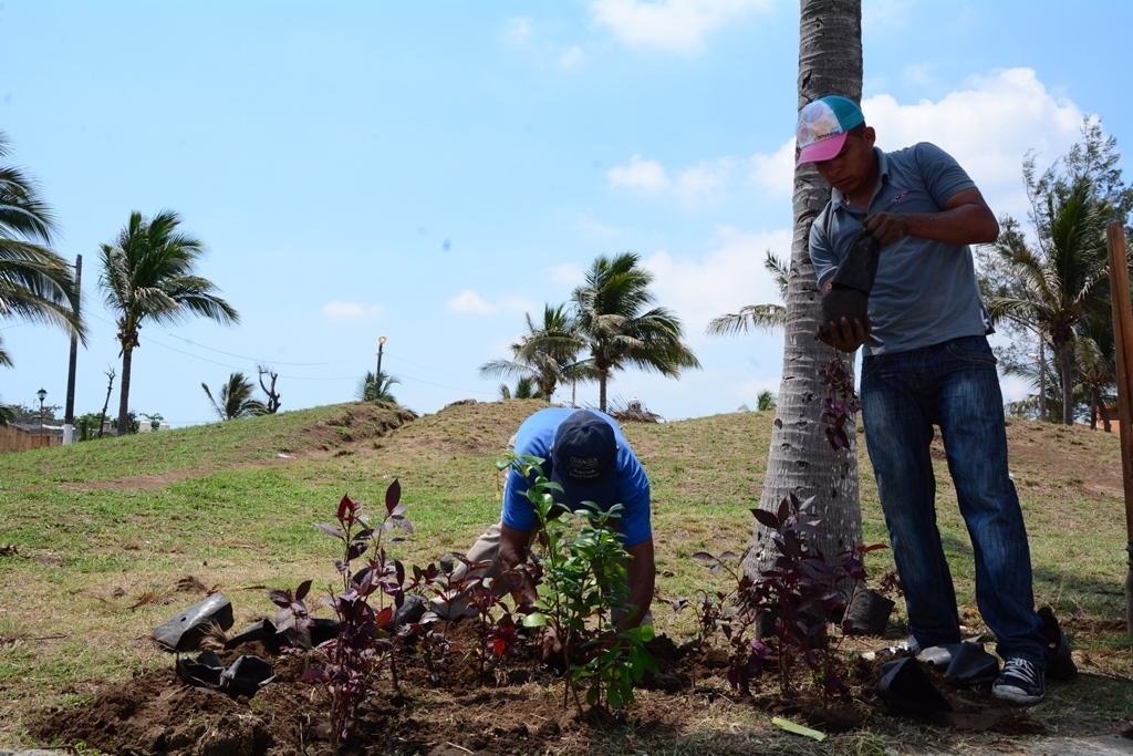 Redoblan labores gobierno municipal en el mantenimiento en - Mantenimiento parques y jardines ...