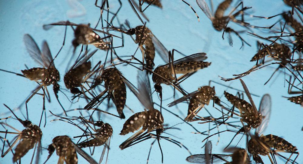 Aedes aegypti sobrevive al invierno; continua crisis de dengue