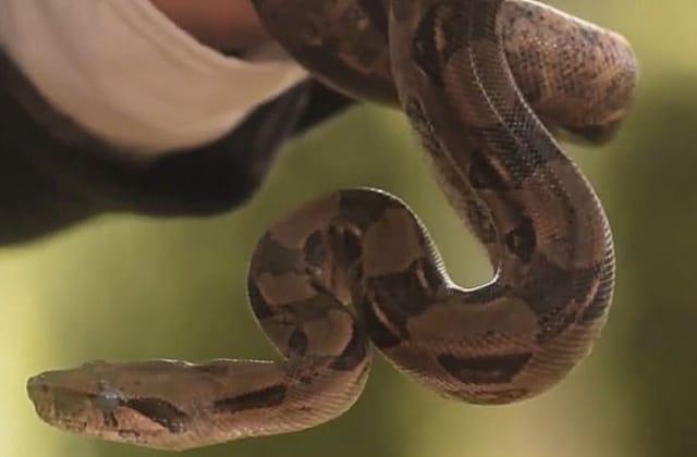 Inundaciones traen serpientes a Xalapa; piden no matarlas