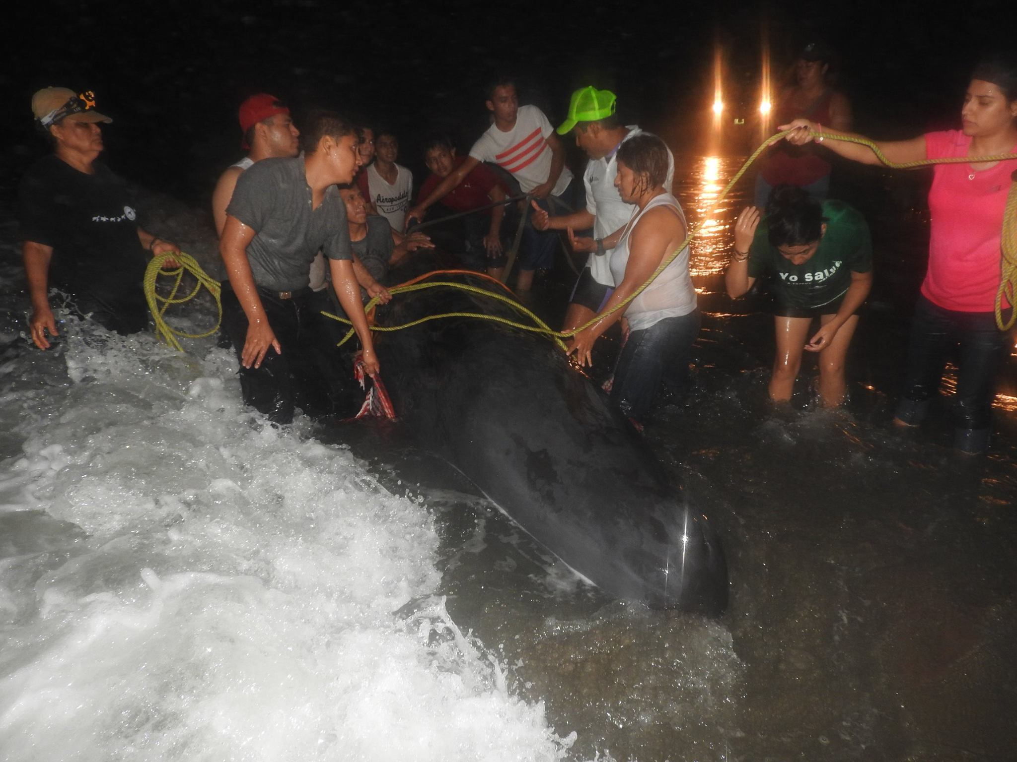 Ballena queda varada en playas de la zona norte de Veracruz