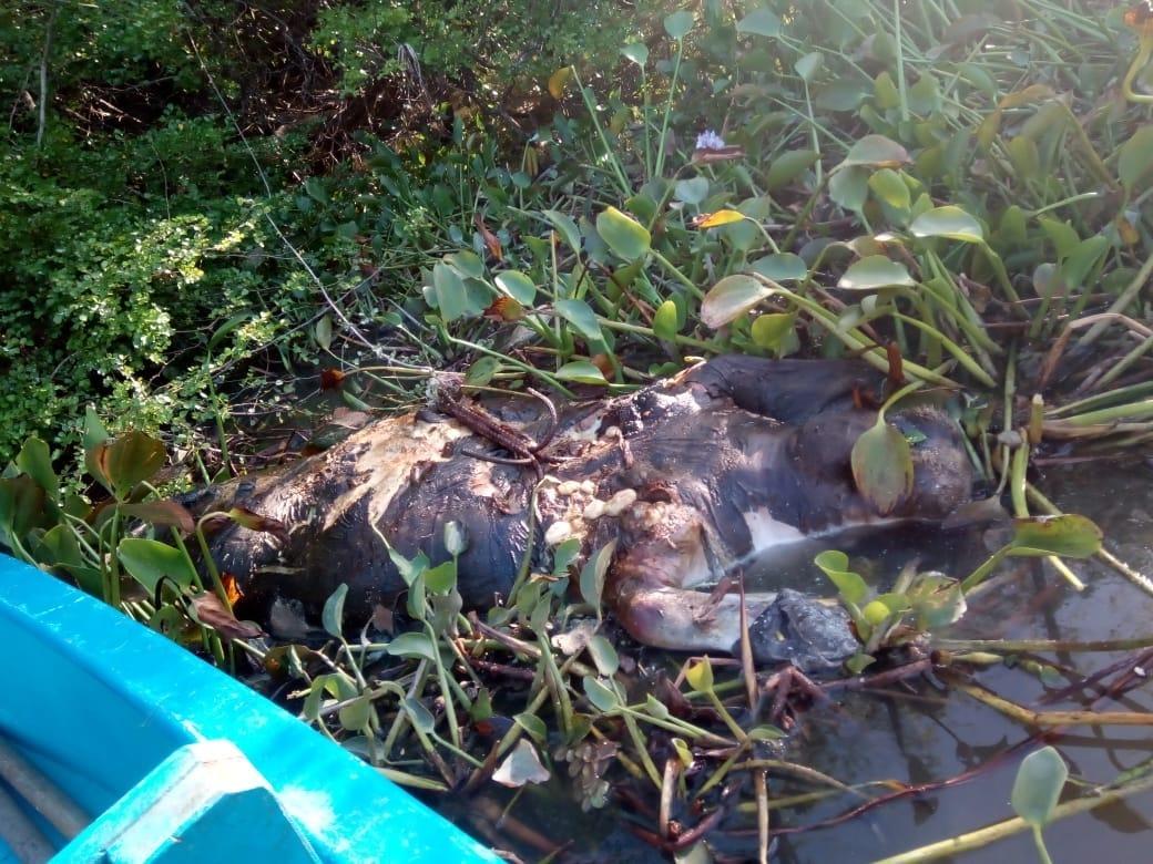 Muere fauna en Tabasco por supuesta contaminación de metales