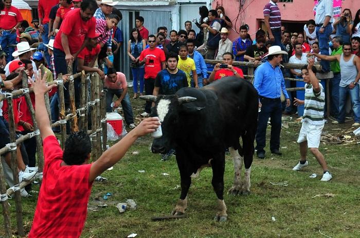 Publican Reglamento de Protección al Toro en Tlacotalpan