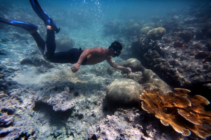 Aceptan demanda por daños al sistema arrecifal en Veracruz