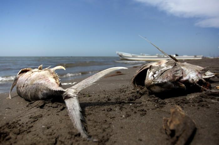 Desaparecen especies de peces en Veracruz: Investigadora UV