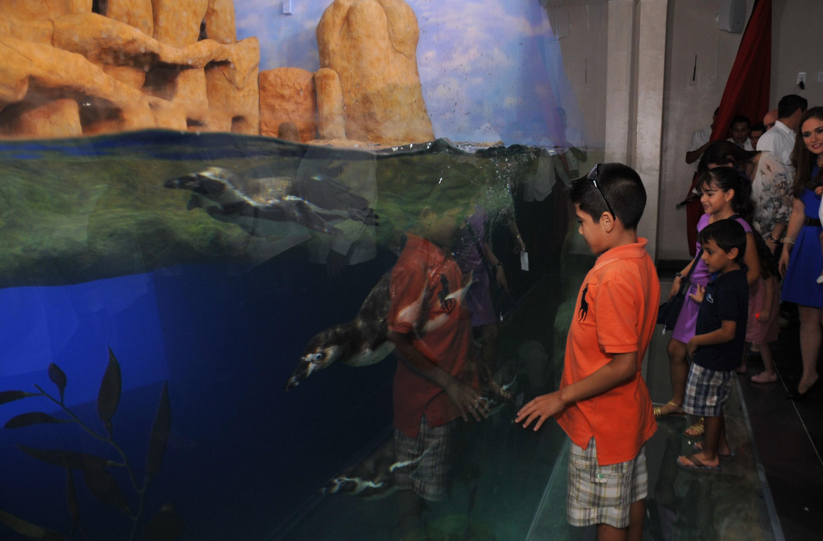 Inicia acuario de veracruz programa de convivencia con for Acuarios zona norte
