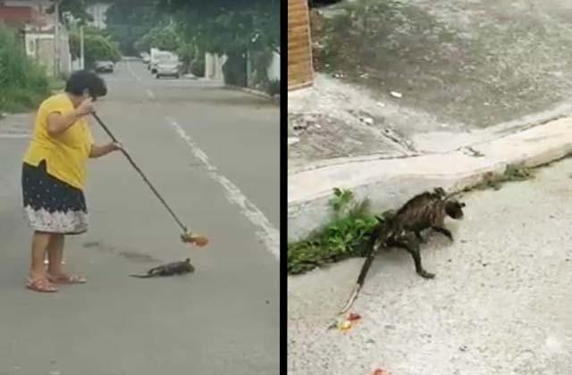 VIDEO: Mujer mata a escobazos a tlacuache en colonia de Veracruz