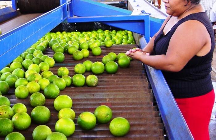 Hasta $40 llegó el precio del limón; alza, por factores estacionales: productores