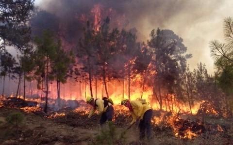 Dos incendios forestales en Pico de Orizaba y Cofre de Perote