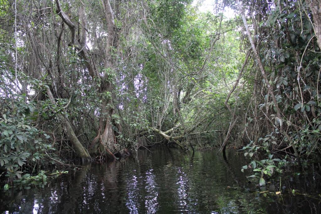 Reactivan proyecto de parque eólico que amenaza humedales en Alvarado