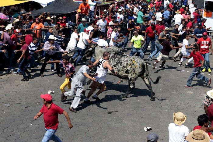 Registro obligatorio para quienes participen en suelta de toros en Tlacotalpan