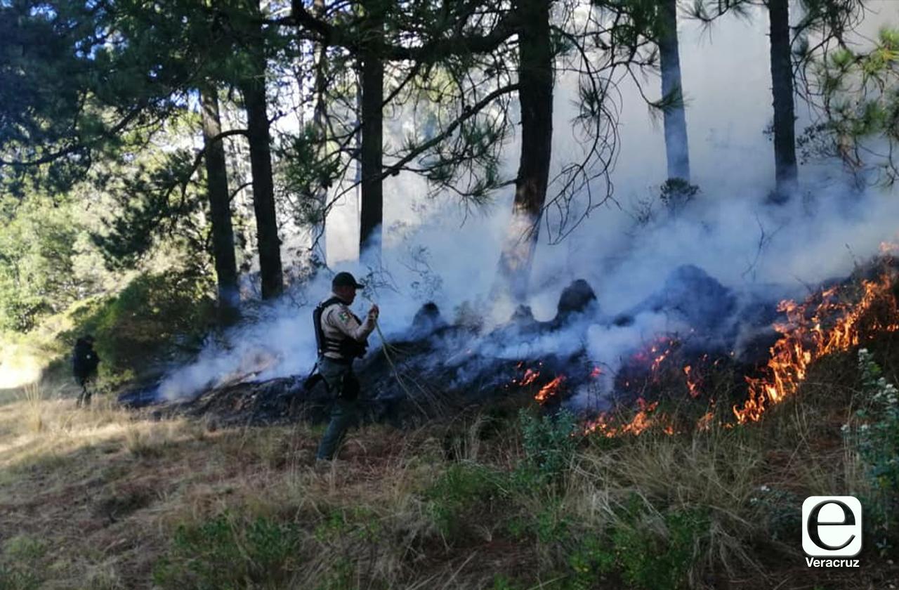 Incendio en La Gloria posiblemente ocasionado por tala clandestina en Perote