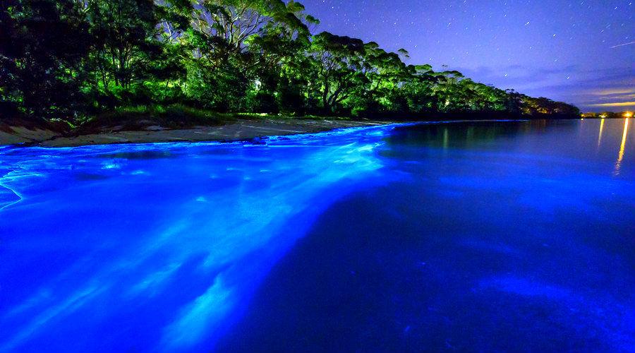 Dos playas y dos lagunas mexicanas para disfrutar la bioluminiscencia