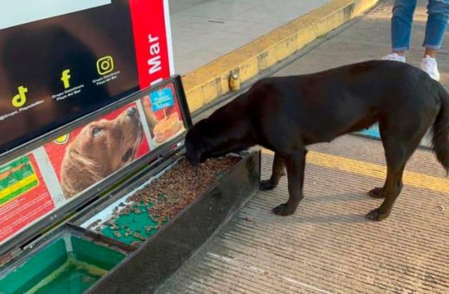 Gasolinera en Mina instala comedero para perritos callejeros