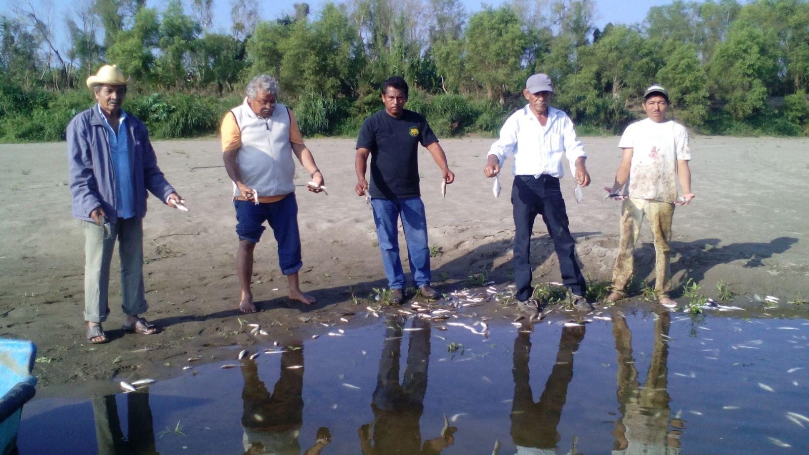 Pescadores acusan a Citrofut por mortandad de peces en el Bobos