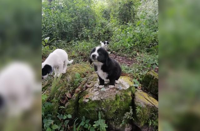 Alertan por cachorros abandonados en Cerro del Borrego