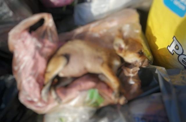Fallece perrita arrojada a la basura, en Coatza