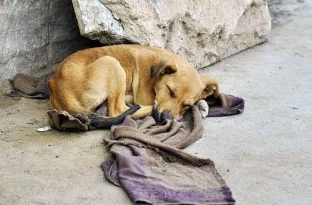 Adopta, no compres; 5 razones para dar hogar a un lomito
