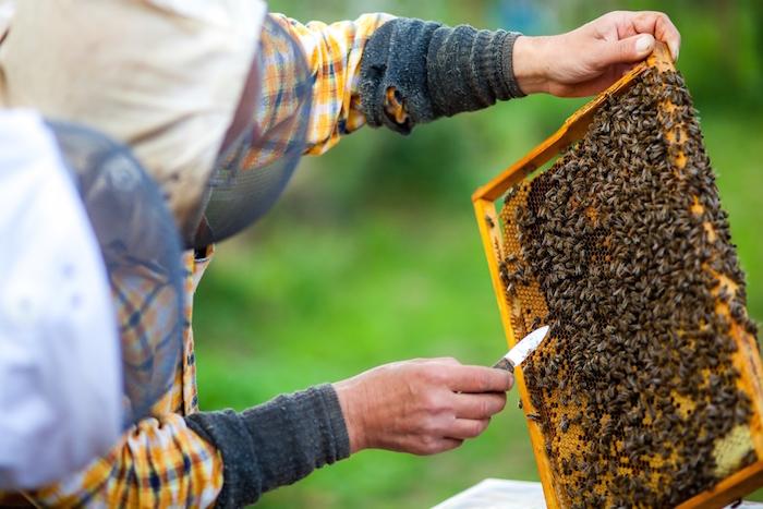 La UNAM sale en ayuda de las abejas, claves en la ecología, y va tras los virus que las acaban