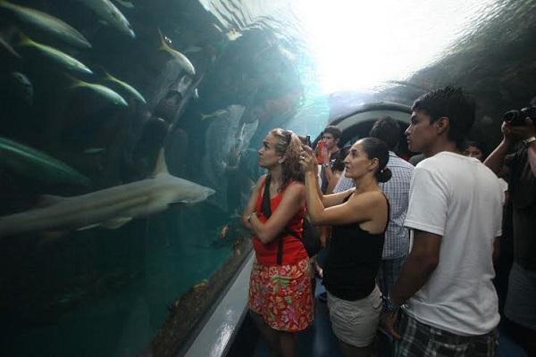 Espera Acuario de Veracruz incrementar 30% su afluencia
