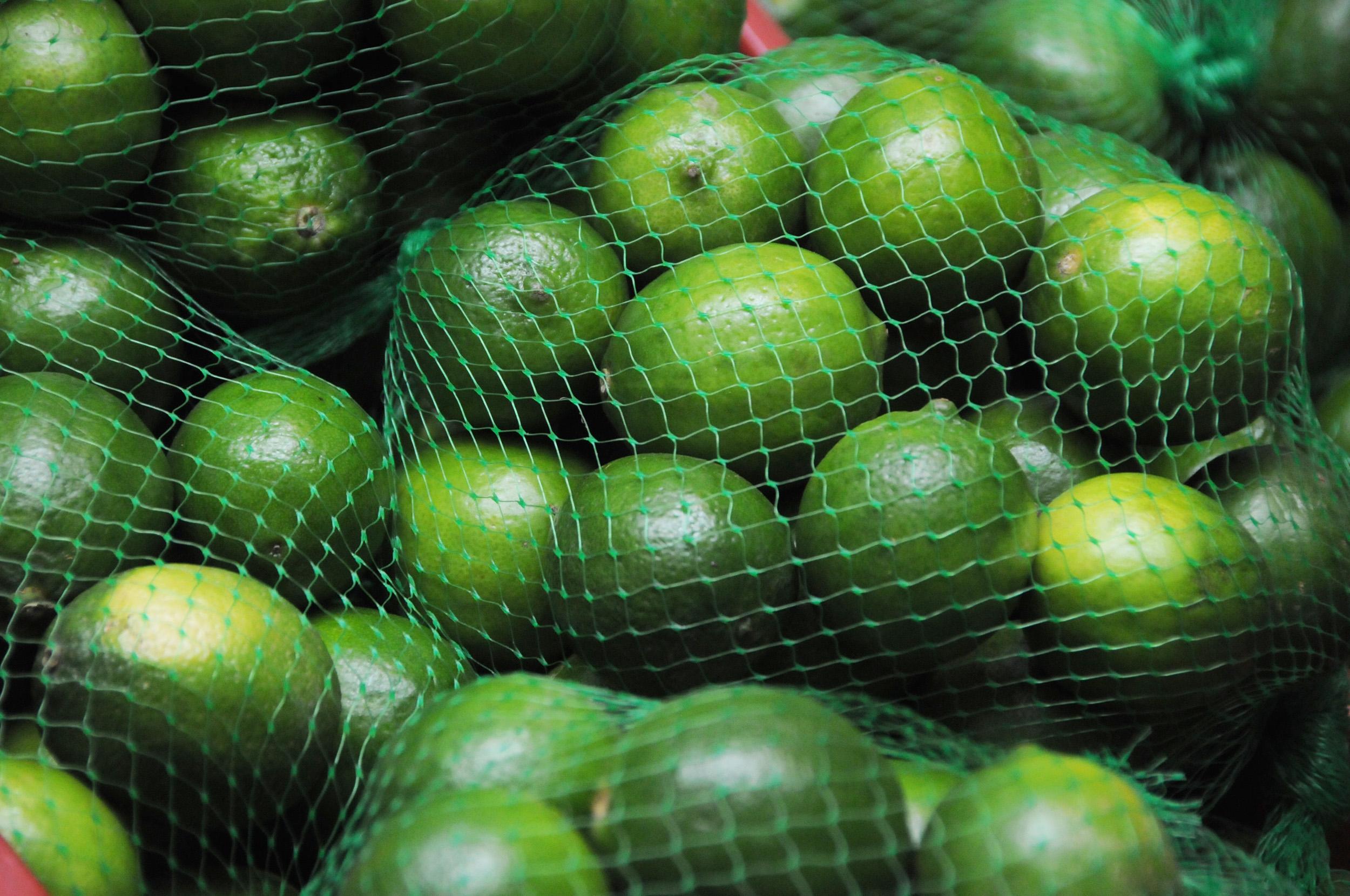 Se desploma exportación de limón persa por la canícula