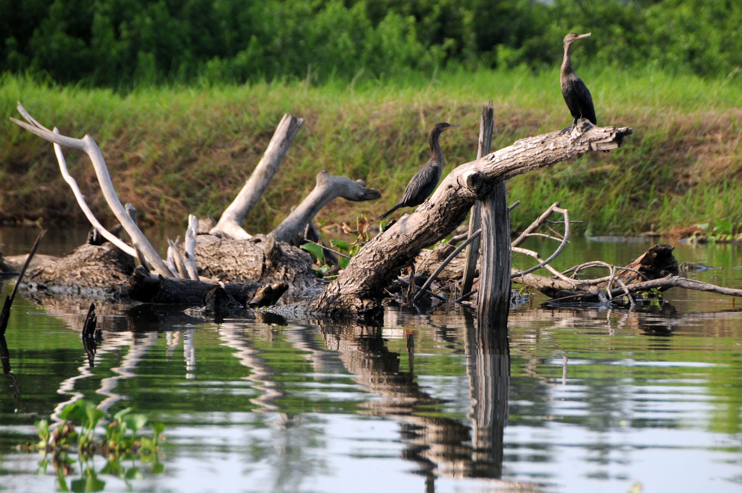 En rango medio la salud bosques y selvas de Veracruz