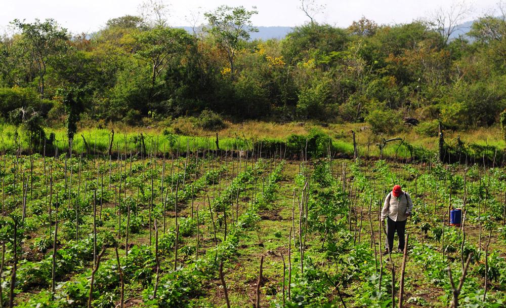 Veracruz ejercerá apenas 620 mdp para el campo este año
