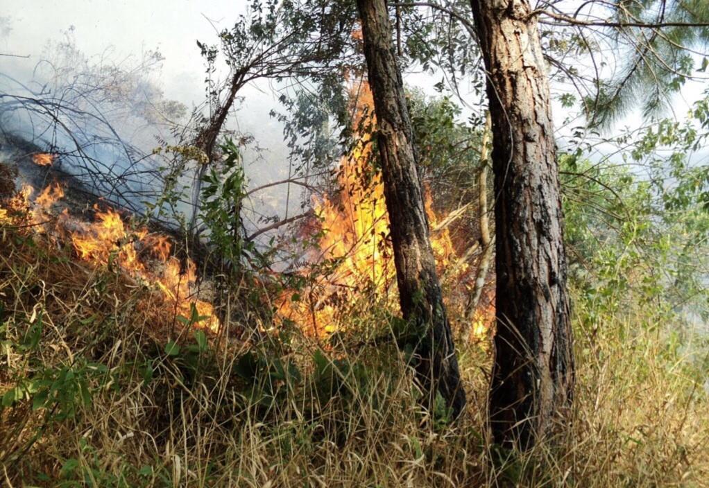 Anualmente son devastadas en Veracruz 30 mil hectáreas de bosque