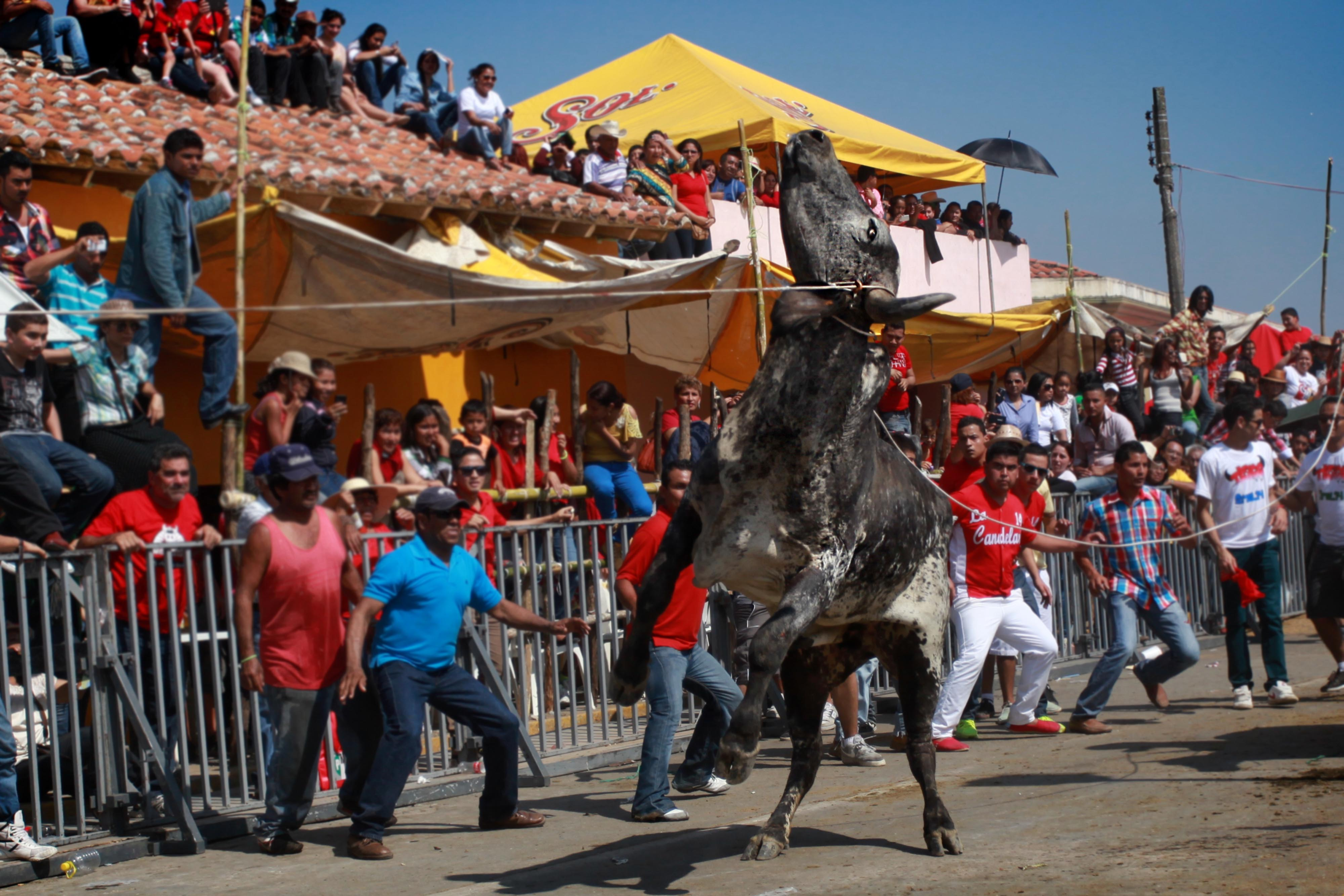 Congreso prohíbe uso de animales en fiestas patronales