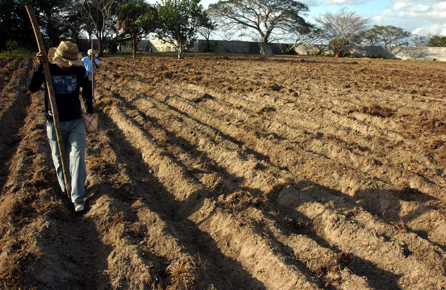 Erosión y calidad del agua impactan en producción alimentaria