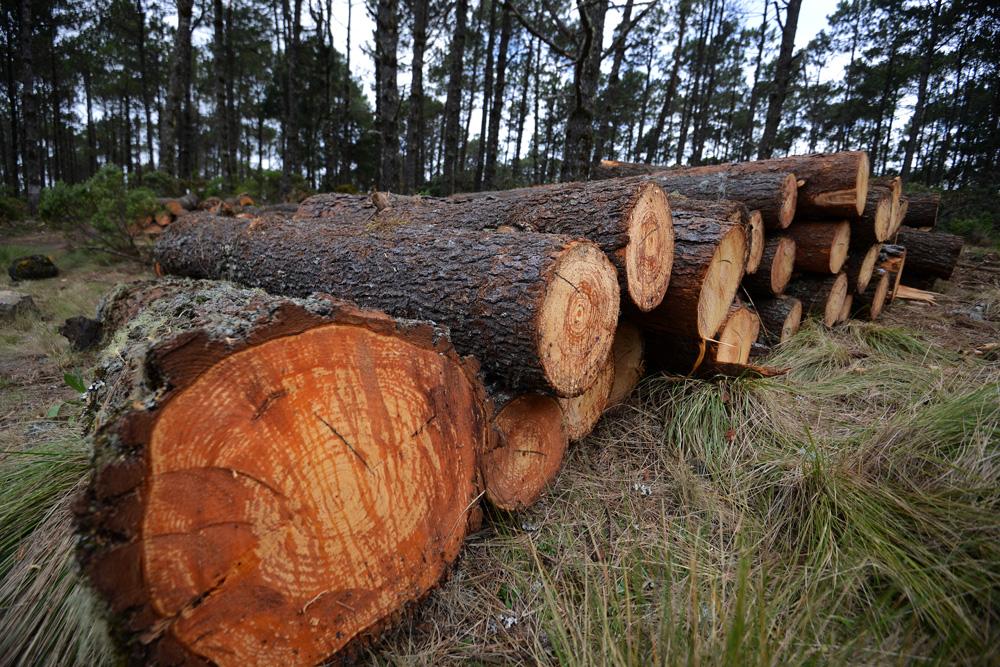 Veracruz el estado más deforestado de México