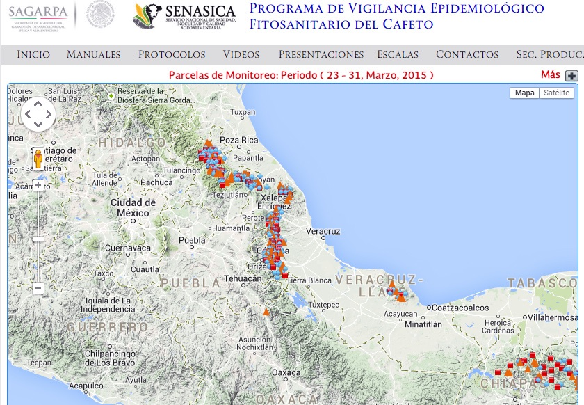 Roya afecta 42 mil hectáreas de cafetales en Veracruz