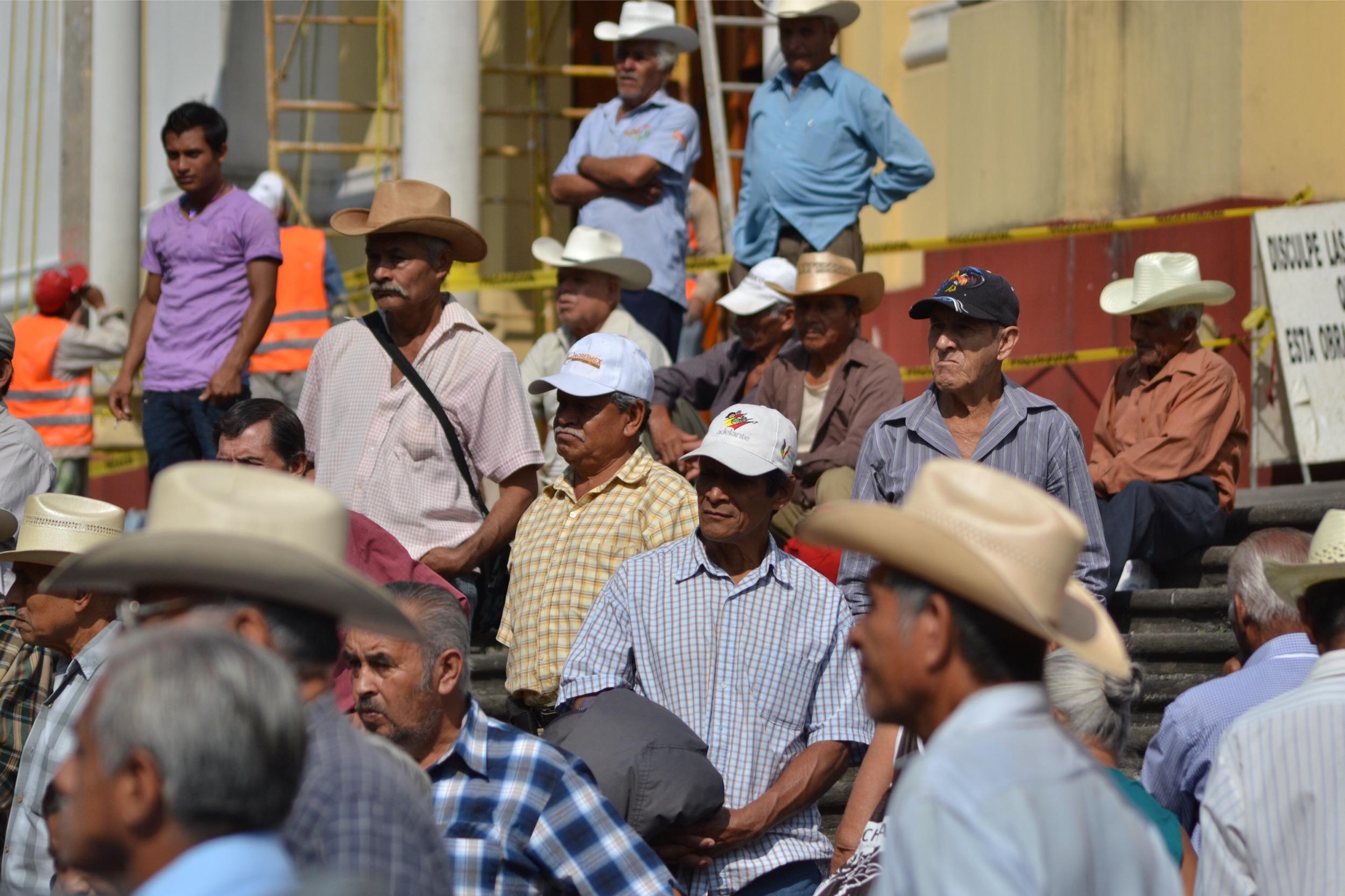 Sagarpa pide devolución de 117 mdp del programa emergente de cafetaleros
