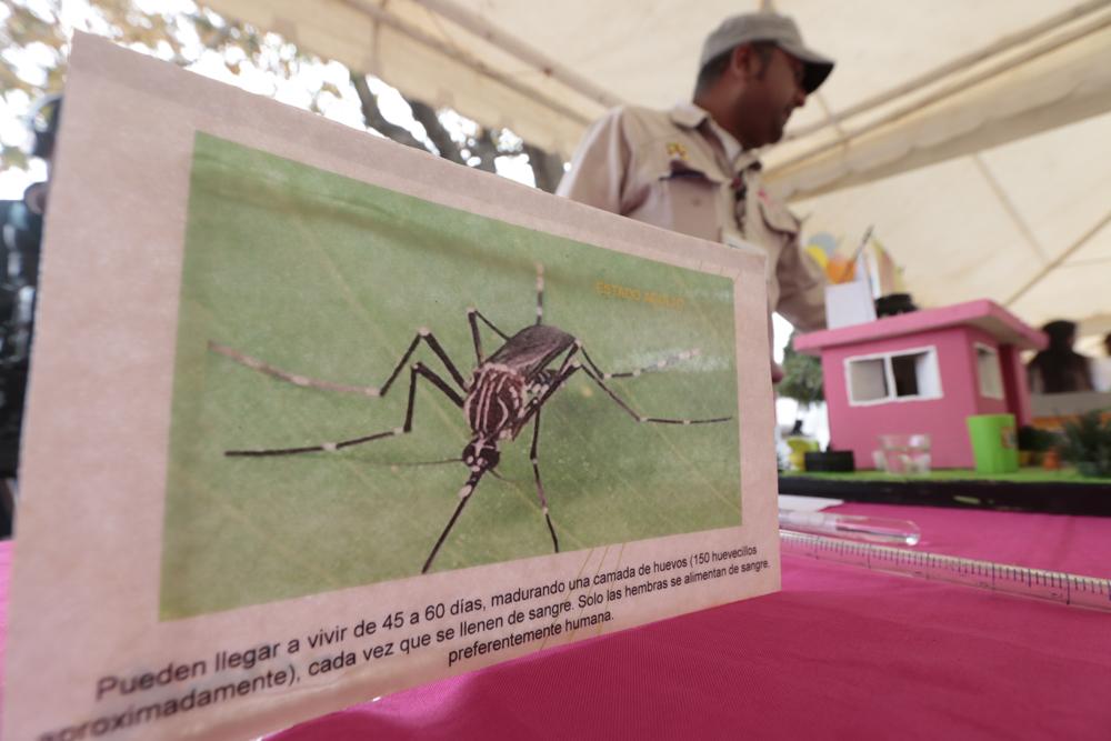 Reportan 7 casos de zika, 3 de embarazadas y 342 casos de dengue