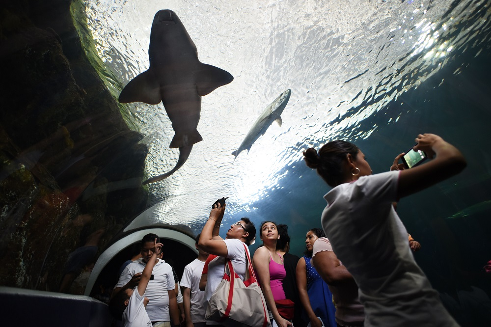 Rehabilitan áreas del Acuario de Veracruz previo a las vacaciones de verano