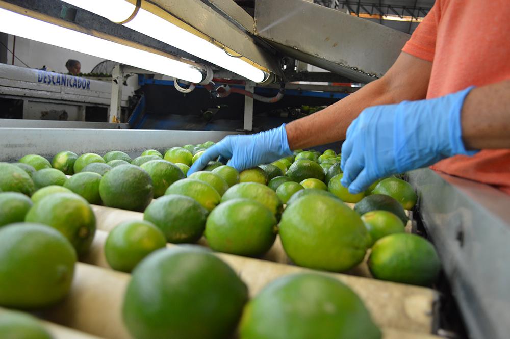 China sería la alternativa de Veracruz para exportar cítrico