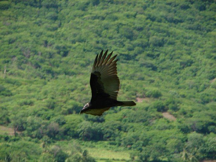 Por alteración de su hábitat, se reduce la población de aves