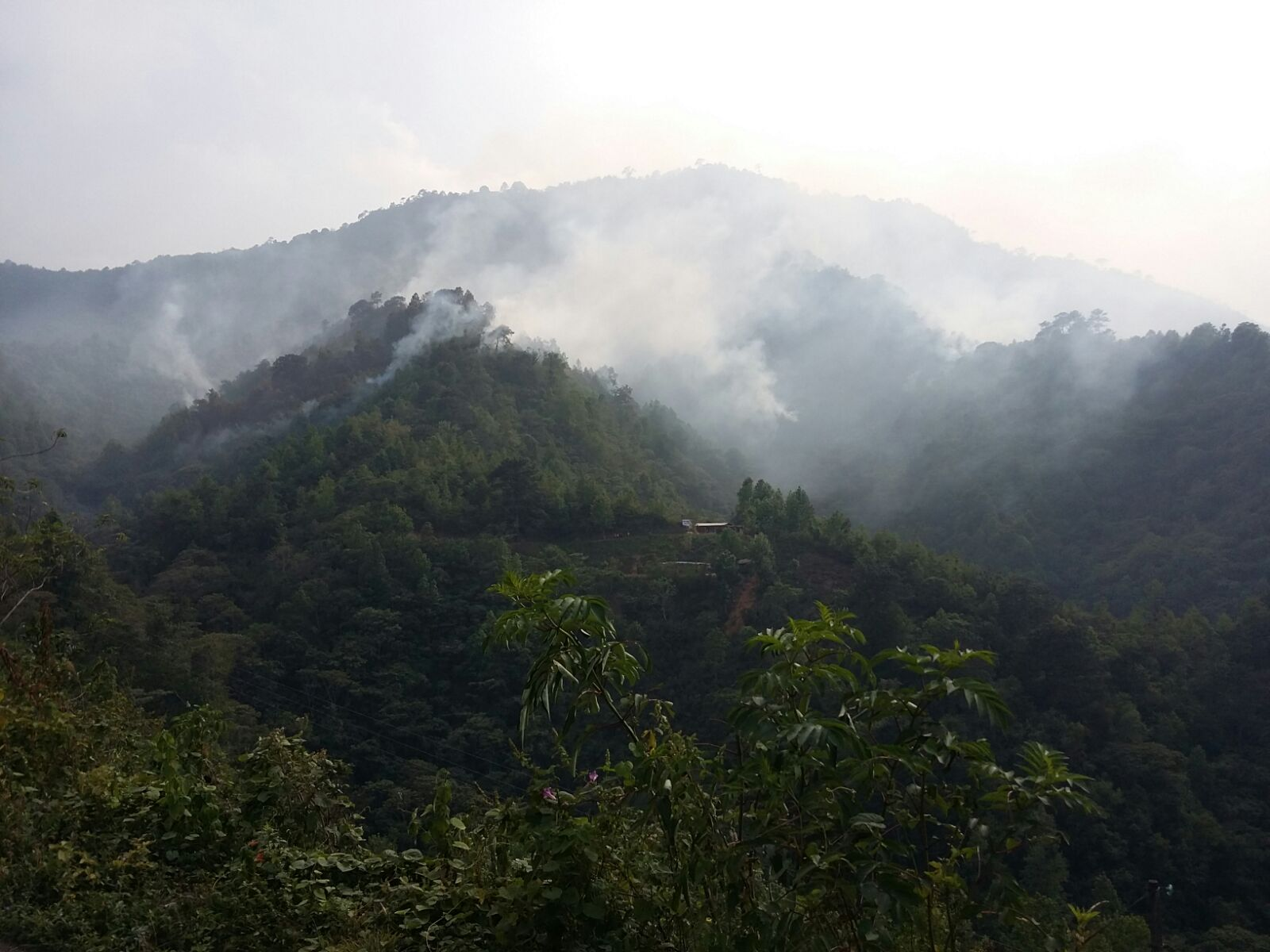 Conafor reporta tres incendios forestales en la zona centro