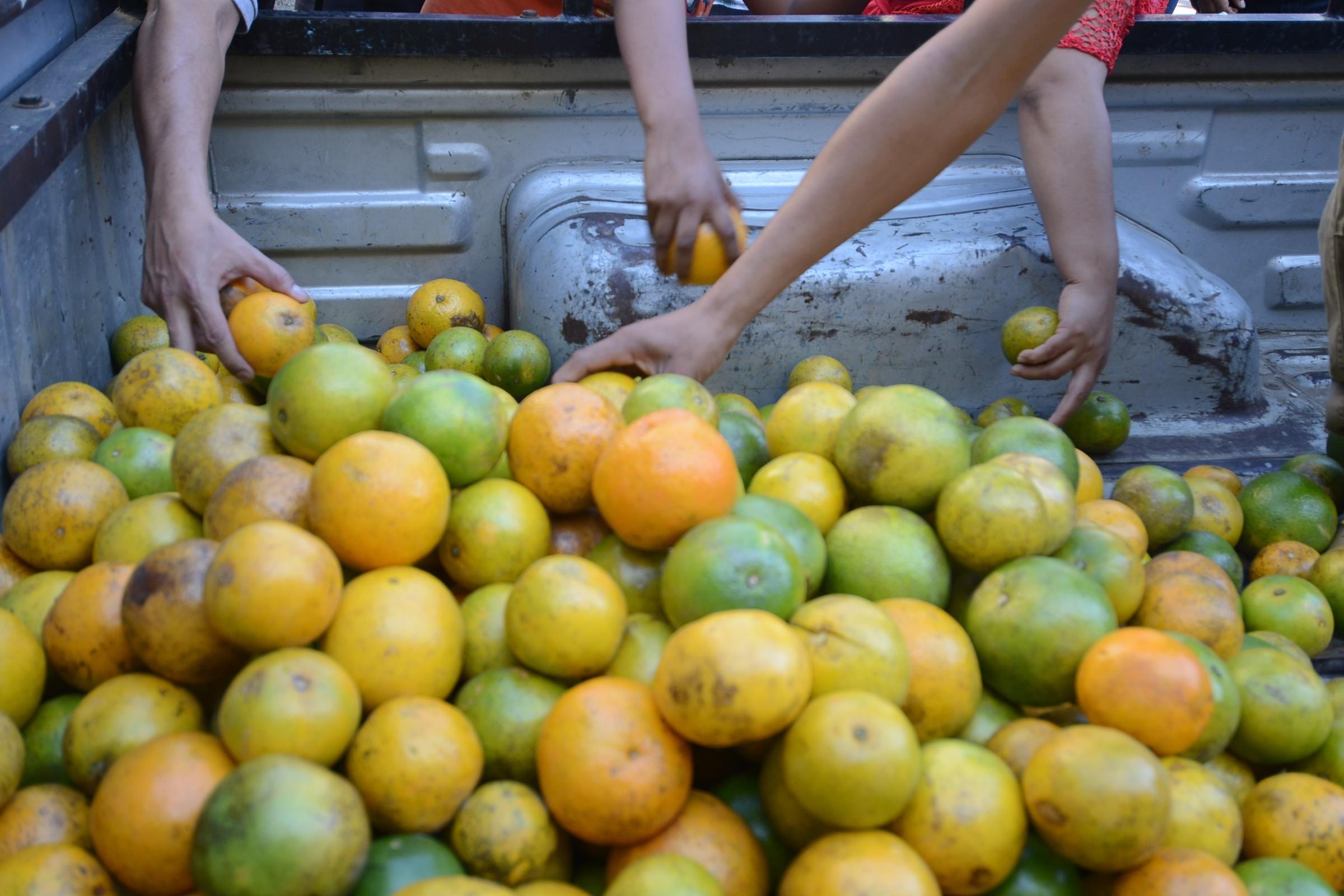 Preocupa situación de la naranja y la vainilla en la zona norte