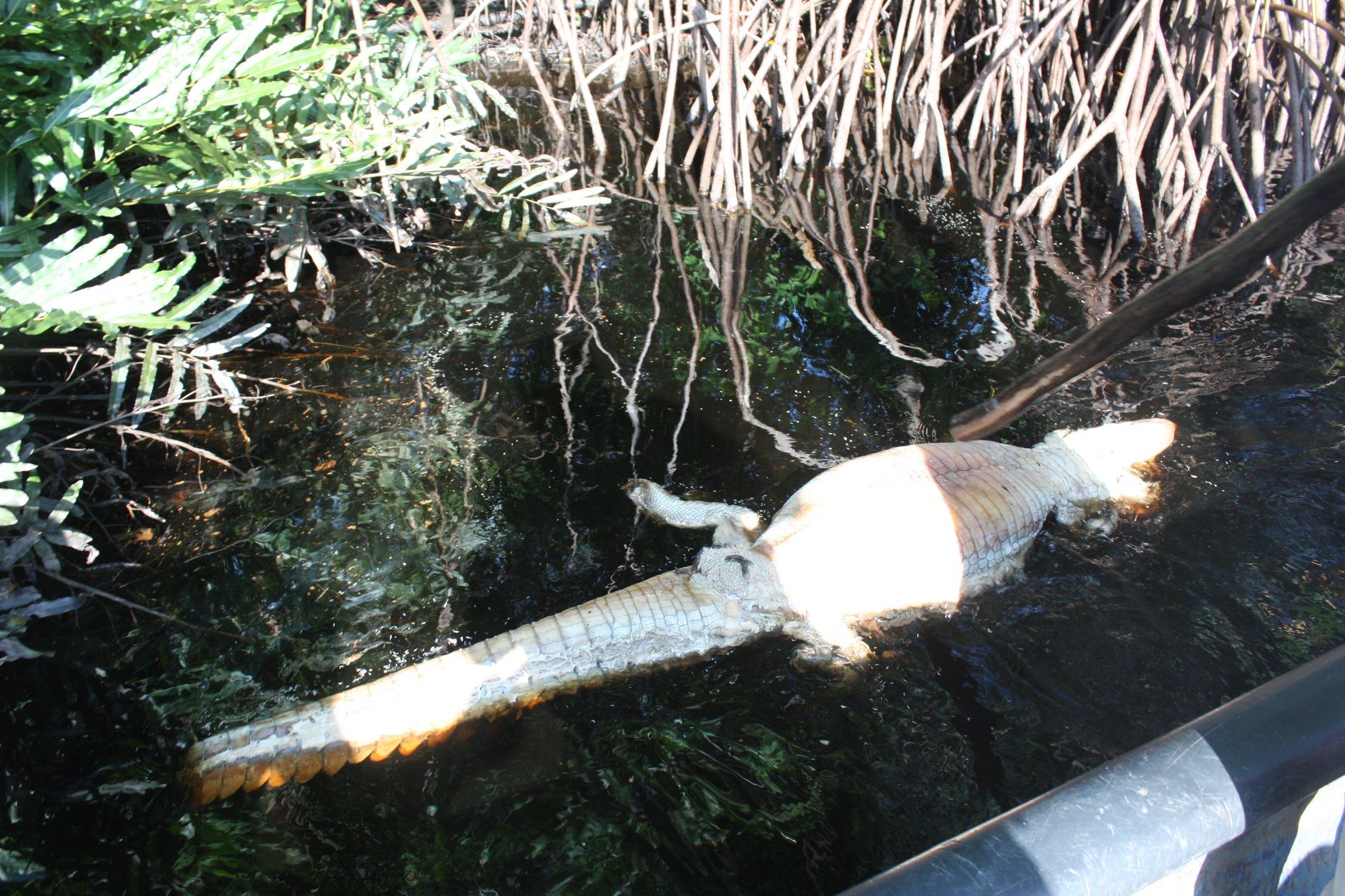 Derrame de aceite provoca ecocidio en el río Tonalá, al sur de Veracruz