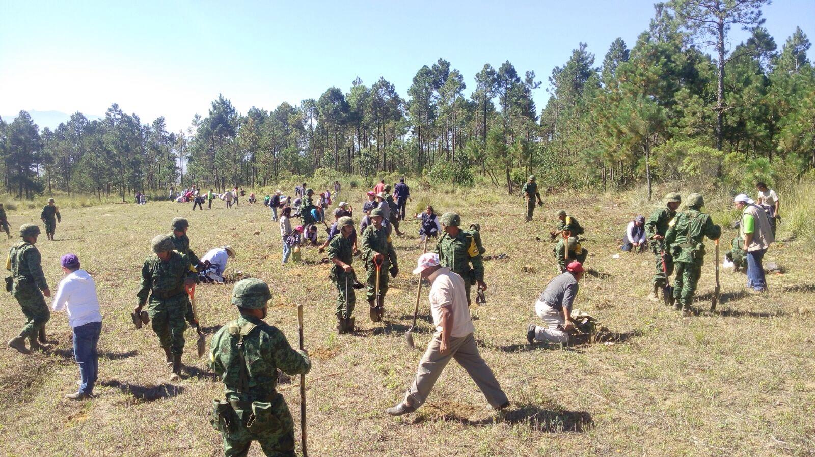Logran controlar incendio en el Pico de Orizaba
