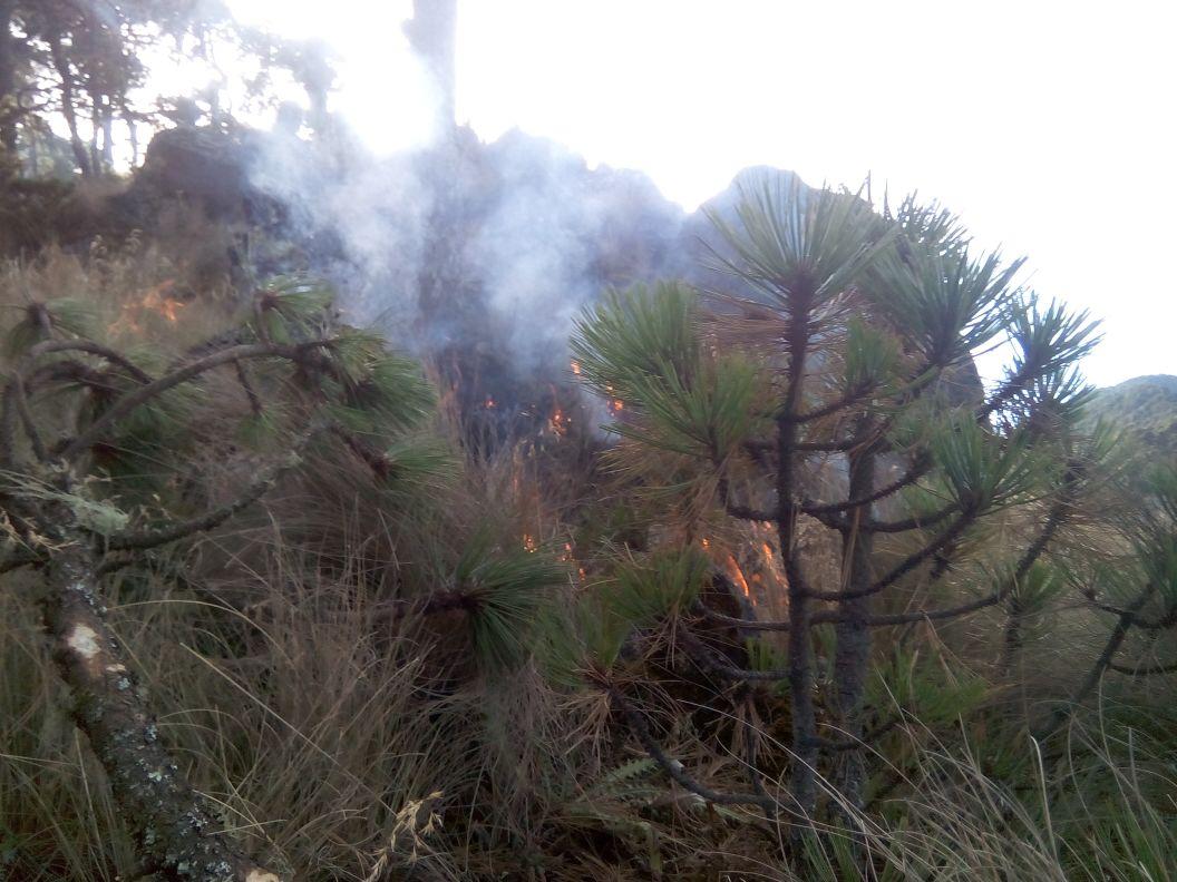 Incendio consume 5 hectáreas en el Pico de Orizaba