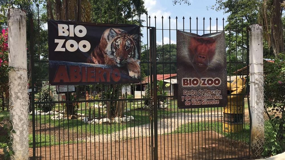 Al intentar tomarse una selfie, mujer recibe zarpazo de jaguar en Bio Zoo