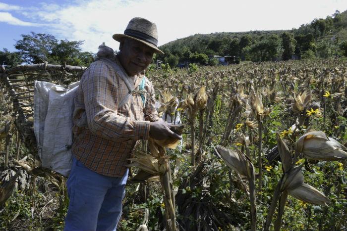 La devaluación del peso acelera la ruina del agro y el alza en el precio de alimentos: productores