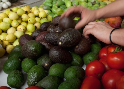 Aguacate se vende en $75 por kg en Tijuana