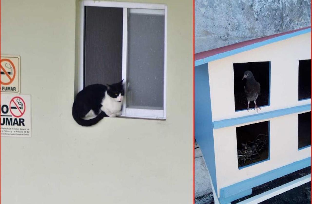 Funcionarios del IPE se viralizan por ayudar a gatos sin hogar
