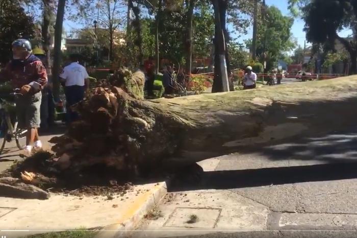 Viento del norte derriba cinco árboles en Xalapa