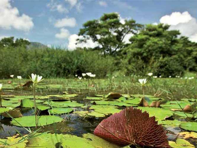 Decretan tres nuevas áreas naturales protegidas en Veracruz