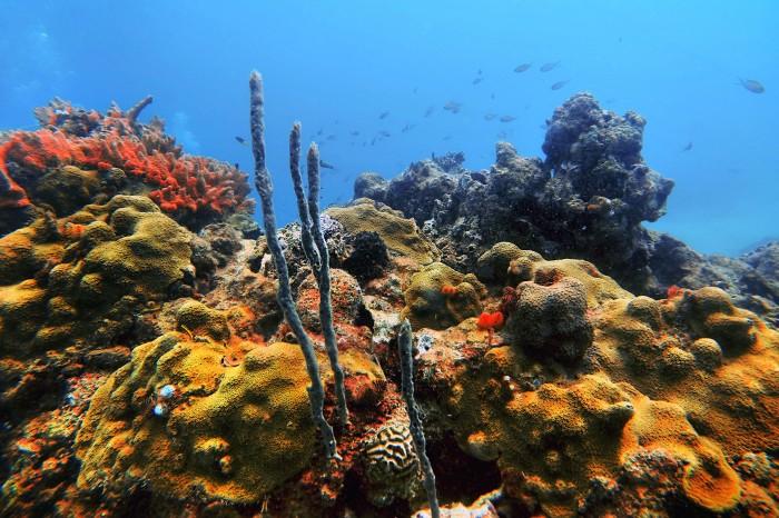 Apiver detecta nuevos arrecifes no contemplados en ampliación portuaria